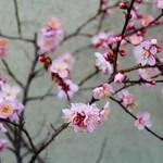 今井食堂 - 吹雪いていましたが春が!!(*^-^*)