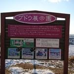 池田ワイン城 - ぶどう園があります