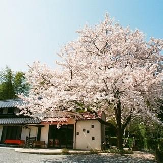 春には庭の桜を見ながら・・・