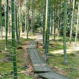 整備された竹林を抜けると・・・