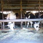 46968553 - 牛舎