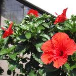 4700765 - 入り口のお花も綺麗にお手入れされています。