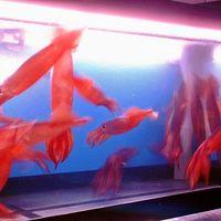 SUSHI-DINING 魚浜 - 活魚がウリのお店です!
