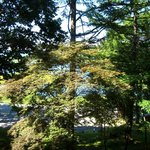 4719476 - 森の奥に、ちらちらと湖面が