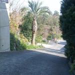 ラ・ポルタ - 2015/12 国道135号線から入る、坂道の入口から見下ろす…坂の角度が怖い。中央の大きな南国の木の下の白い部分が店舗前の駐車場、更に下のアスファルト部分も駐車場