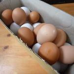 卵太郎 - ずっこけ卵(30個入り 専用の段ボール箱でなく缶コーヒー箱)