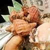 居酒屋 ヒミツキチ - 料理写真:新鮮な魚介は築地直送