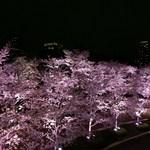 ラ・コリナ - ライトアップされた夜桜も必見‼︎