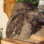 アウルの森 - 店内のフクロウです