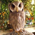 アウルの森 - アフリカオオコノハズク