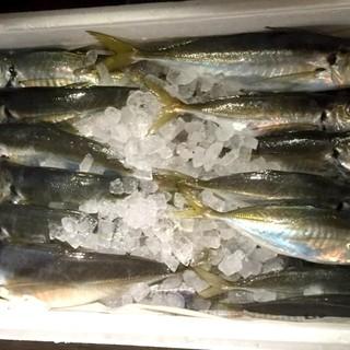 【当日OK】釣り魚の持ち込み可!花夏彩で調理致します!