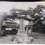 かどや - 青亮寺の案内板にある、在りし日の「槍掛けの松」