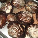 ぶちうまい東 - 赤貝