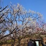 48016830 - 羽根木公園