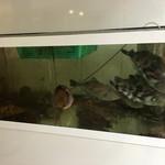 高級活魚 繁光 - 内観