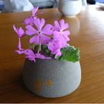 48021105 - 2009/04/16 12:00訪問 テーブルには桜草