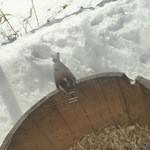 48096596 - 色々な野鳥を見る事が出来ました♪