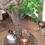 はぐら茶屋 - 店内に、木が生えています。