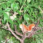 はぐら茶屋 - その木にお住まいのようです(もちろん、ぬいぐるみです)。