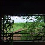 大松庵 - 窓から外を見る