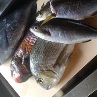 四季彩 鮨楽 - 仕入れにより珍しい魚の入荷もございます