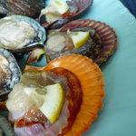 新島水産 - ☆ヒオウギ貝もカラフルさが面白いですね☆