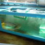 新島水産 - ☆お魚も泳いでいます(#^.^#)☆