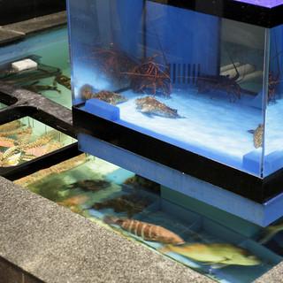 生簀で泳ぐ魚を見ながら