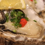 海女房 - 活牡蠣刺し