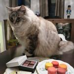 48695445 - ショコラ・マカロン&ムック(猫)
