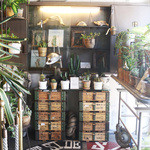 FAbULOUS - 多肉、観葉植物など個性的な植物を販売