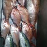 ビーマーリン - 天然真鯛をぜひ味わって下さい