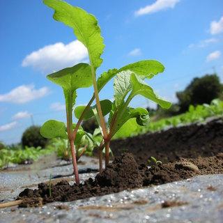 【厳選素材】全国の協力農家から届く新鮮野菜!