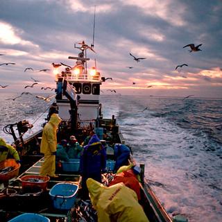 産地直送の鮮魚をお届け!様々な調理法をお楽しみ下さい。