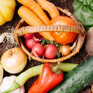 採れ立て新鮮野菜を使った料理