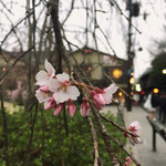 49133573 - 桜の向こうにあるお店