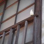 ネコノテパン工場 - お店の上に小鳥ちゃん発見♪見つけられるかなぁ~♪