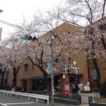 上島珈琲店  - 2016.4  敷地内に桜の木が並びます
