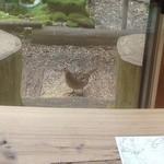 49289269 - 窓のすぐ外に野生の雉さん
