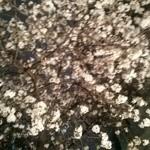49314154 - 夜桜