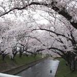 勲碧酒造 - 2016.4 曽本付近3