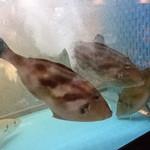 海鮮居酒屋 大和水産 - ウマヅラ?