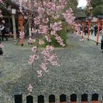 49334516 - 平野神社五分咲き