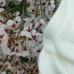 吉備路もてなしの館 山手  - 桜が綺麗♪