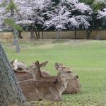 吉野本葛 天極堂 - 奈良と言えば、鹿ですね^^