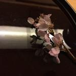 日本料理 花城 - ちょっと、散りかけの見頃が過ぎた桜。やや残念。