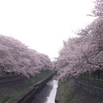 鳥一 - 2016.4  すぐ近くの五日市街道の尾崎橋からの眺め