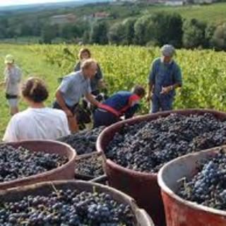 神楽坂で1番ワインが楽しめる飲み放題が人気!29種のワイン