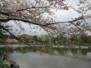 カフェ・ハーモニー - 窓際の席から池を望む(2016/04/08撮影)
