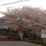美福苑 - 焼肉屋でお花見です
